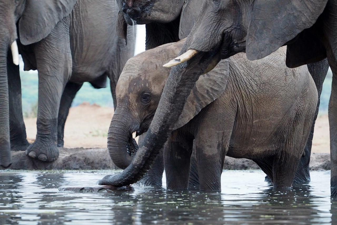 Elefantenbaby im Camp