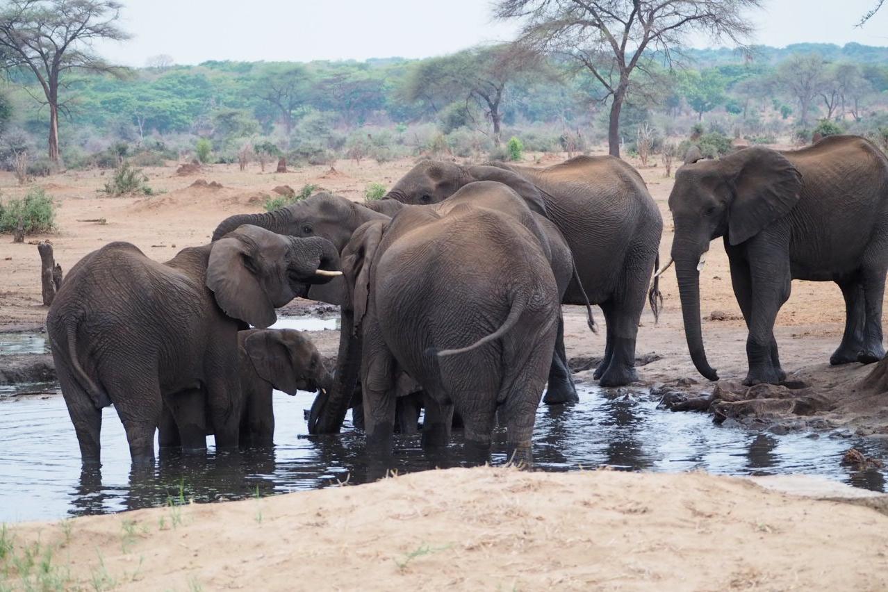 Elefanten am Wasserloch des Camps