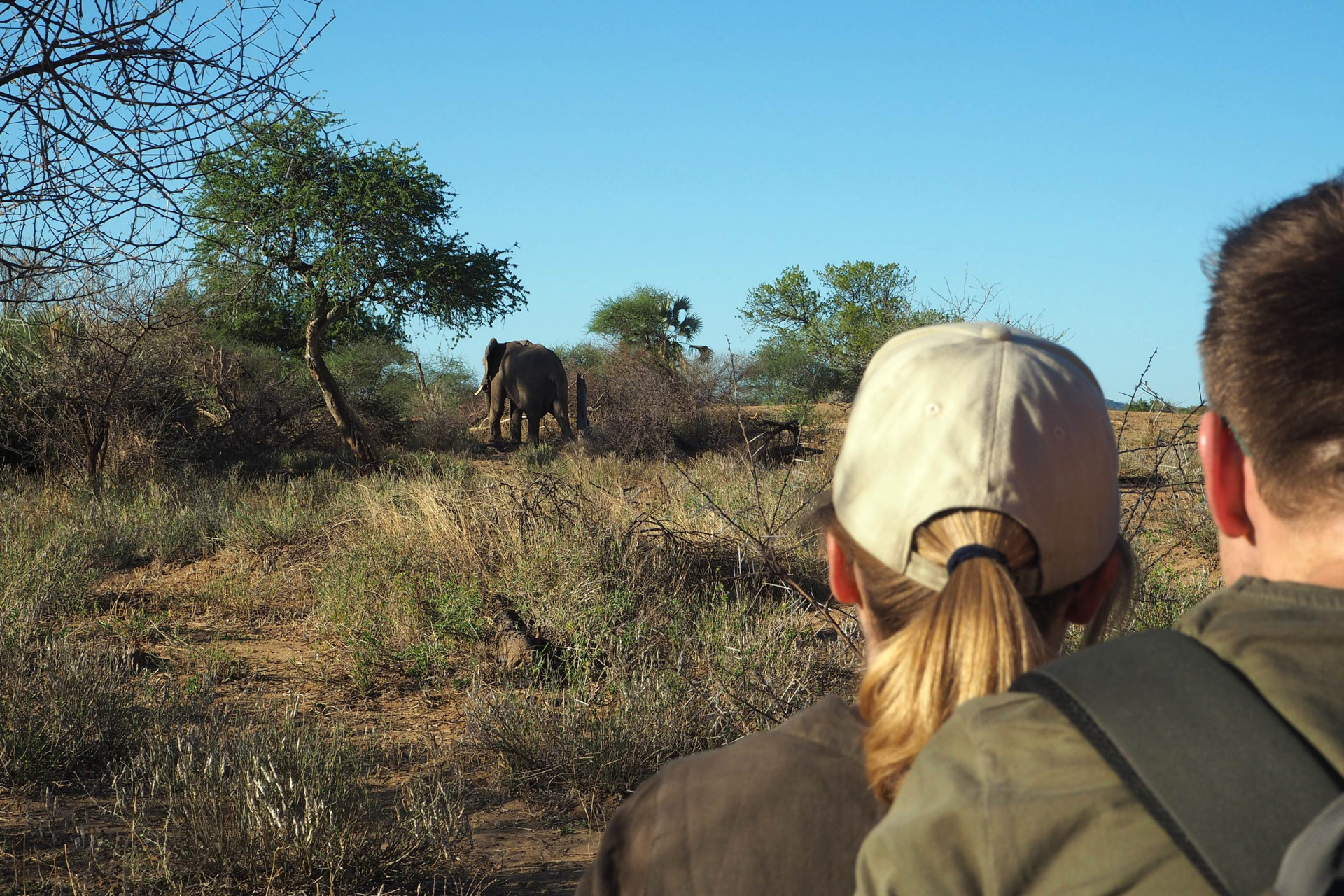 Elefant beim Buschmarsch