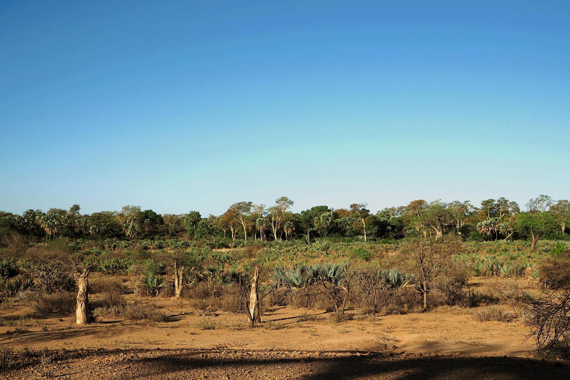 Landschaft Makuleke