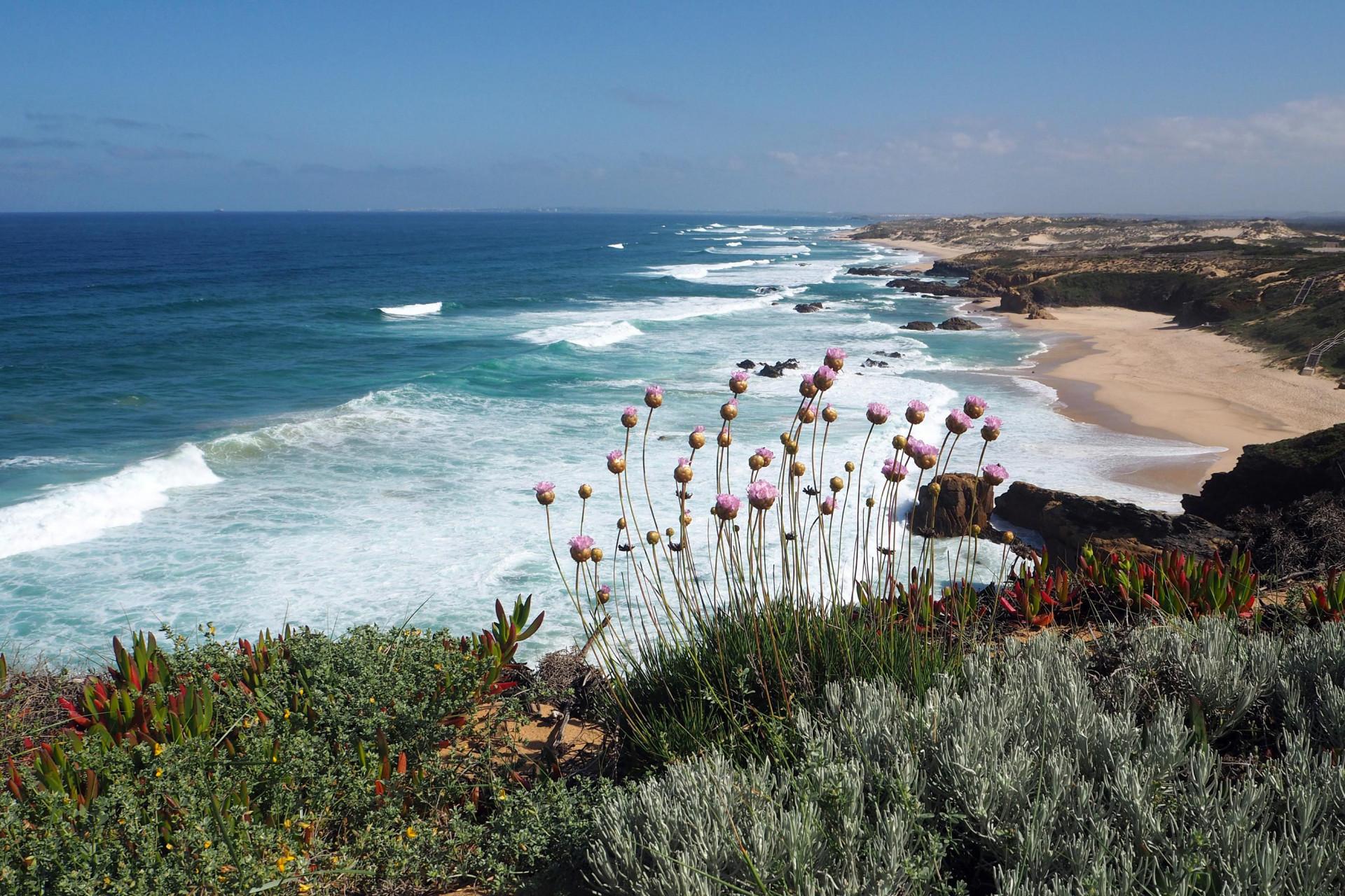 Praia do Malhao Blumen