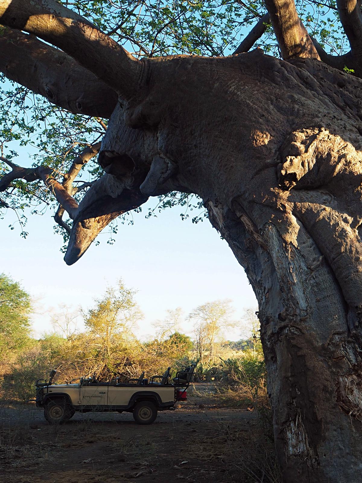 Baobab_Auto