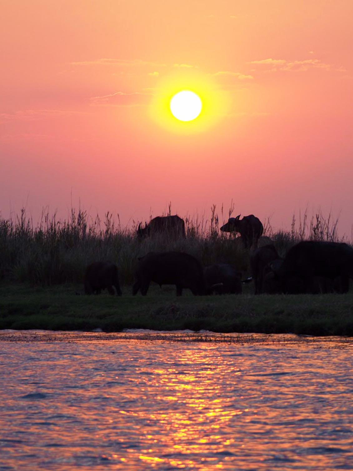 Sonnenuntergang_Chobe_Nationalpark