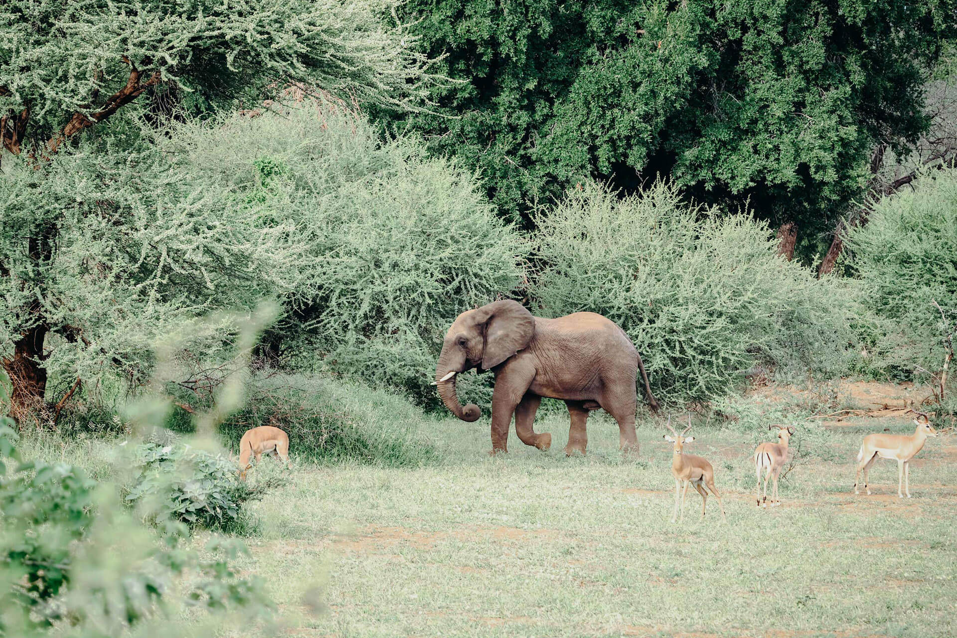 Elephant in Makuleke