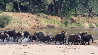 Elephants of Makuleke. . . .  ..................................................................... #natureguide #conservation #fieldguide #southafrica #wildlife #protectelephants #wildlifeconservation #elephant #endangered #protectwildlife #wildlifephotography #endangeredanimals #bekindtoelephants #makuleke #krugernationalpark #africa #elephants #pafuri #africanamazing #nature_photo #naturephotograph #conservationphotography #natureshot #wildlifeonearth #worthmorealive #savetheelephants #africageophoto #animal_perfection @wildestafrica @ecotraining